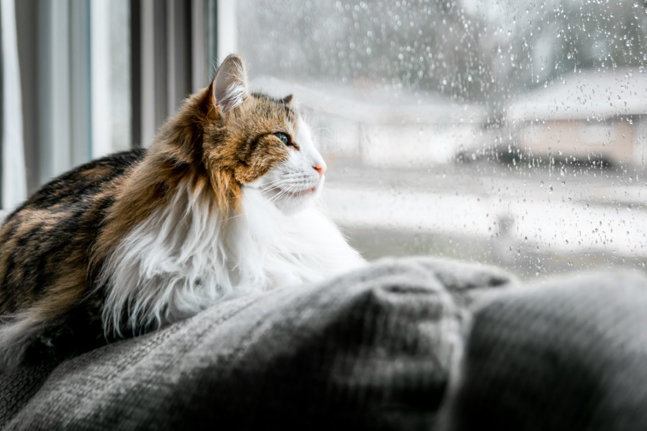 Cat sits on pillow looking out window