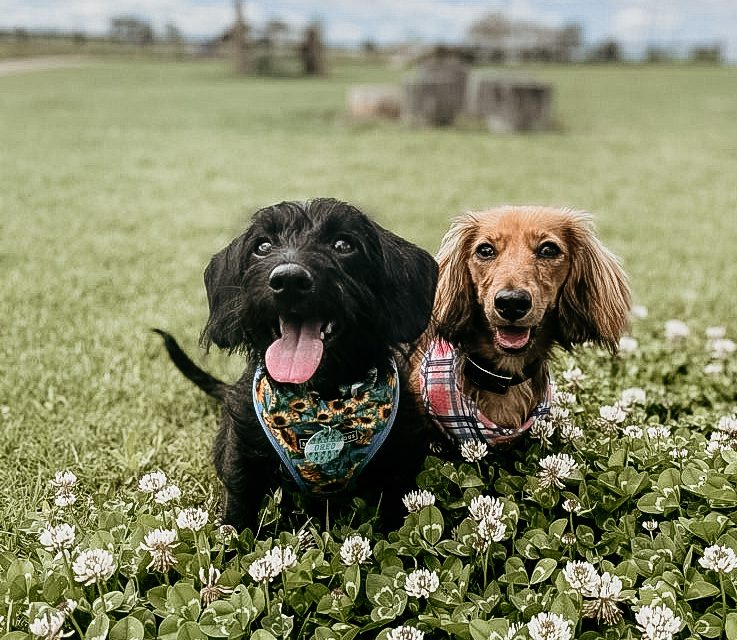 https://www.pawzandme.com.au/wp-content/uploads/2020/11/walkies-737x640.jpg