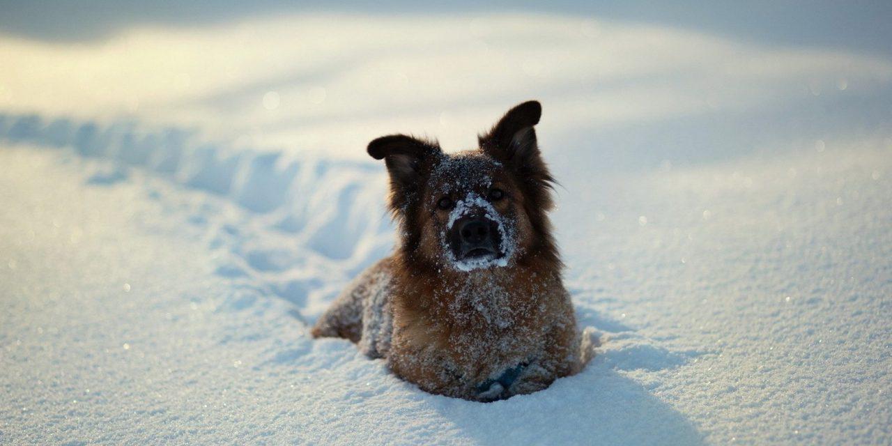 https://www.pawzandme.com.au/wp-content/uploads/2021/04/Best-Tips-To-Keep-Dog-Warm-in-Winter-e1533012799173-1280x640.jpg
