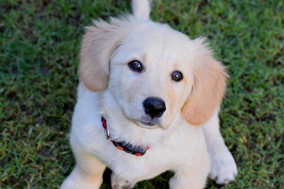 https://www.pawzandme.com.au/wp-content/uploads/2021/04/Puppy-960x640.jpg