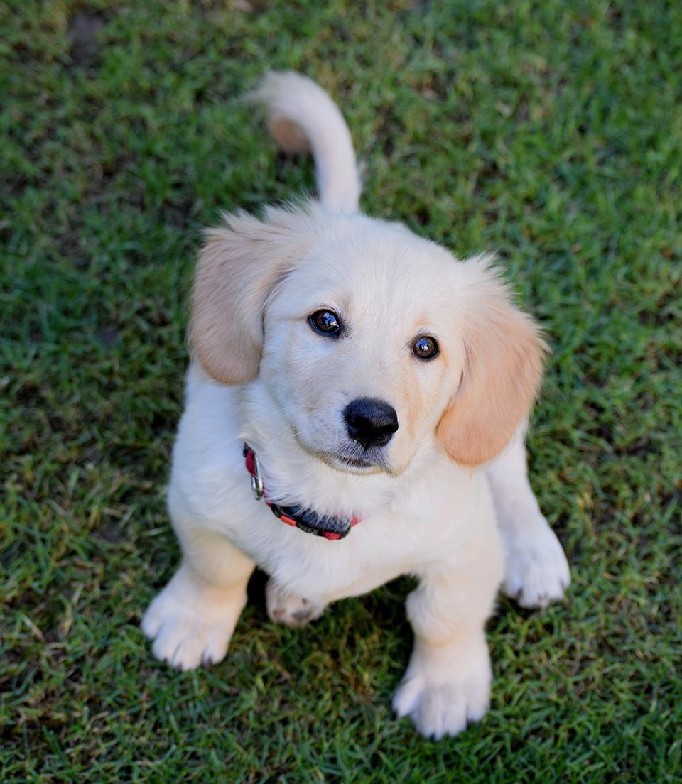 https://www.pawzandme.com.au/wp-content/uploads/2021/04/Puppy.jpg
